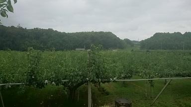 しかの農園 梨 台風